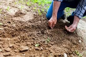 05 Planting